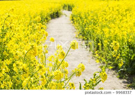 壁纸 成片种植 风景 花 植物 种植基地 桌面 450_318