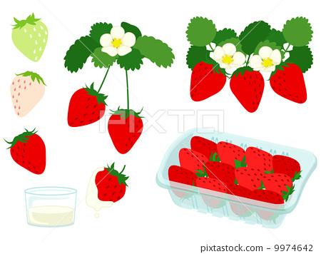 图库插图: 矢量 草莓 摘草莓