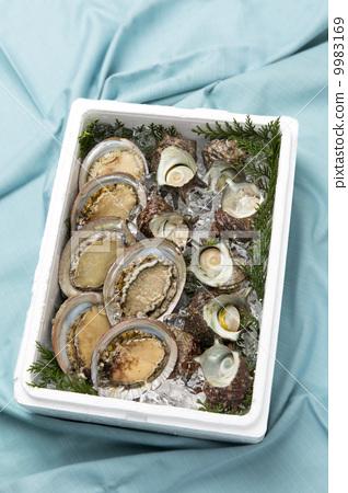 带壳海鲜图片大全集