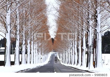 冬天 冬 首页 照片 风景/自然 季节 冬 寒冬 冬天 冬  *pixta限定素材