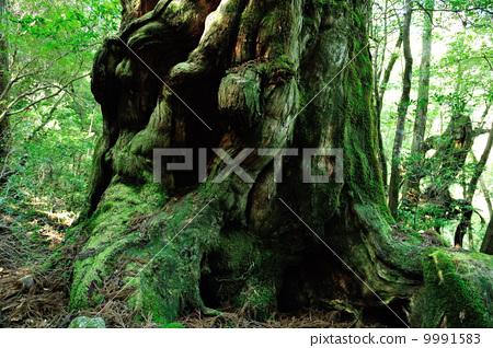 绿色 山峰 森林-图片素材 [9991583] - pixta