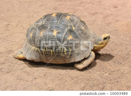 爬行动物_昆虫_恐龙 乌龟 照片 乌龟 札幌 圆山 首页 照片 爬行动物