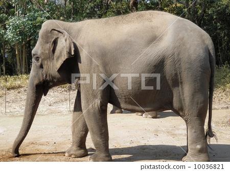 图库照片: 大象 边 侧面图