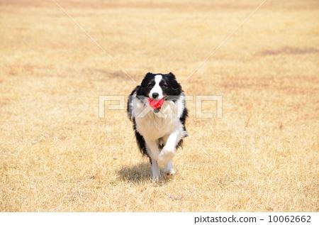 动物比赛跑步咋画图片