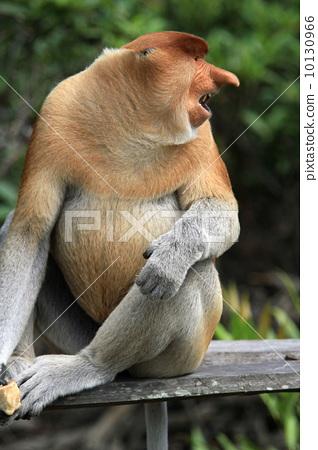 热带雨林 雨林 首页 照片 动物_鸟儿 陆生动物 猴子 猴子 热带雨林