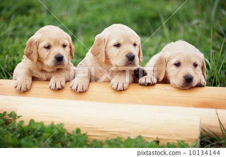 小狗 动物宝宝 动物群