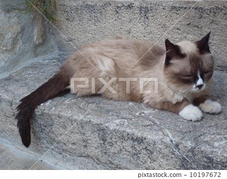 法国南部 睡觉的猫 一只动物