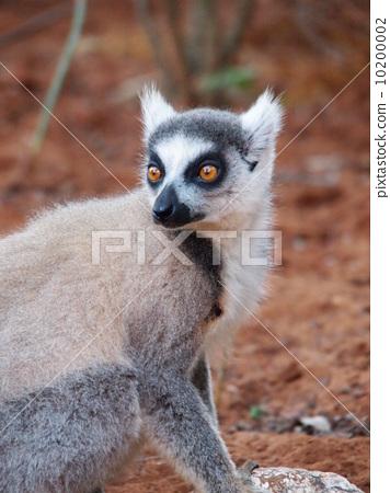 照片: 猴子 自然美 动物