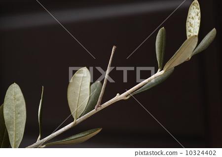 图库照片: 虫子 尺蠖 昆虫