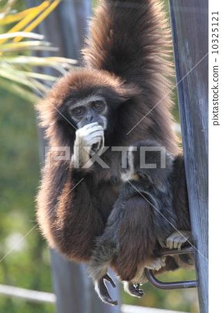 陆生动物 猴子 照片 猴子 父母身份 父母和小孩 首页 照片 动物_鸟儿