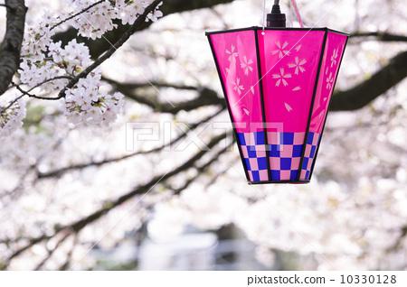 樱花 纸做的灯或灯笼 非城市场景