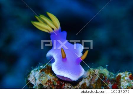 壁纸 动物 海底 海底世界 海洋馆 水族馆 鱼 鱼类 450_320