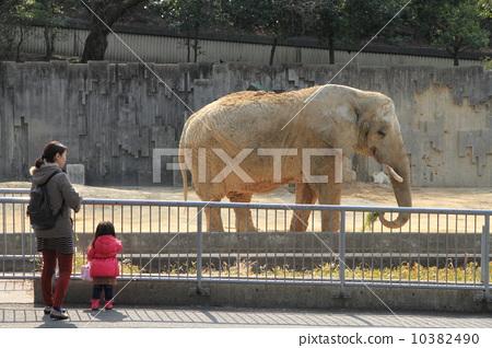 非洲象 动物园