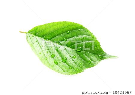 自制树叶水印画