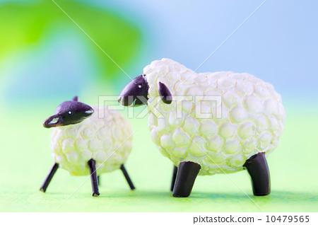 父母和小孩 绵羊 羊