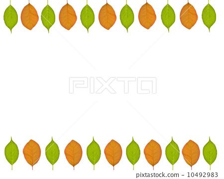 树叶 银杏叶 边框