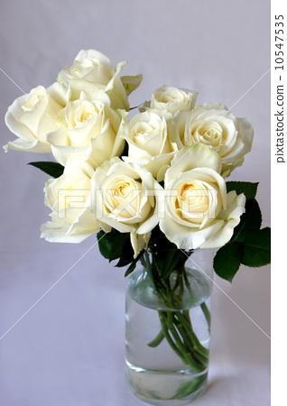 照片素材(图片): 玫瑰 玫瑰花 可爱