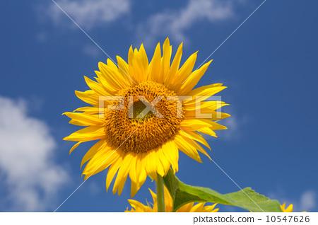 花朵 蓝天 蓝蓝的天空