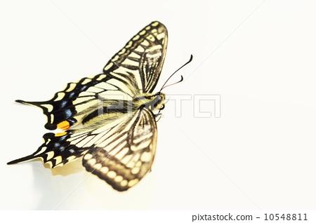 图库照片: 蝴蝶 白底 去底