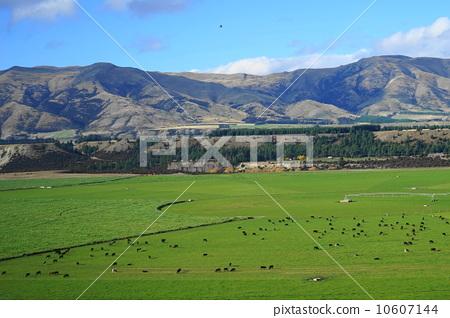 图库照片: 新西兰 乡村风光 农村场景