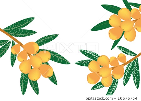 水果树叶简笔画