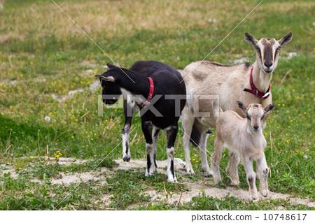 小孩跟动物合影