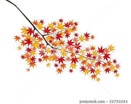 插图: 树叶 树枝 银杏叶