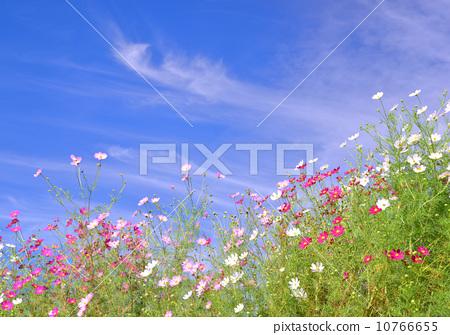 花朵 花卉 蓝蓝的天空