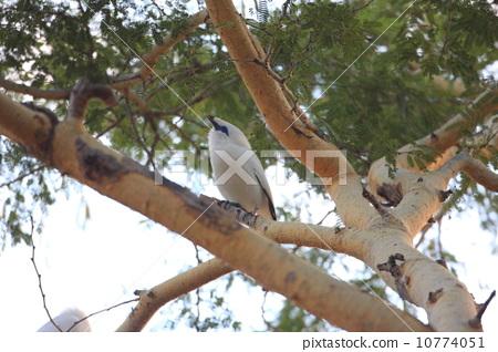 野生鸟类 小鸟 保护