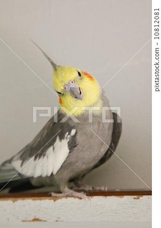 玄凤鹦鹉感冒了,老是打喷嚏,怎么办