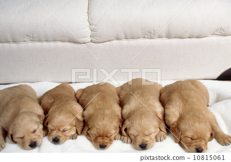 种小动物 stock photos