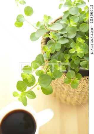 室内盆栽 观叶植物 室内设计