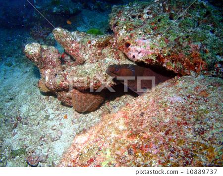 海鳝 海洋生物 跳水