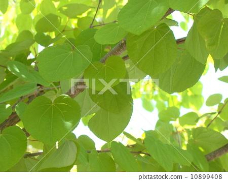 树叶 银杏叶 假发