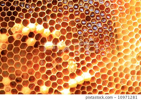 梦见蜜蜂窝_图库照片: 蜜蜂 窝 信州