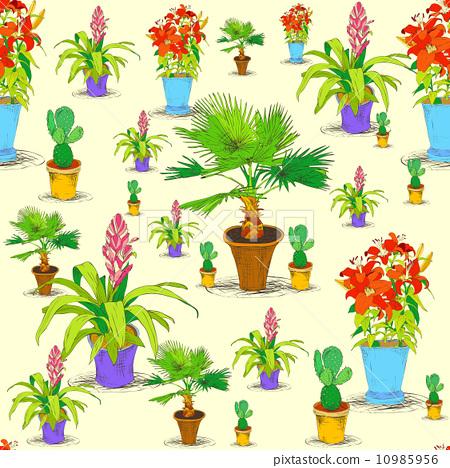 龙血树属植物