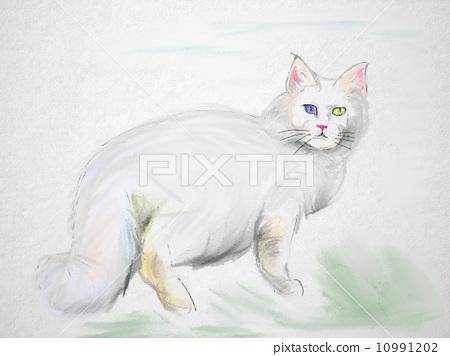 猫 胆小的 水彩画