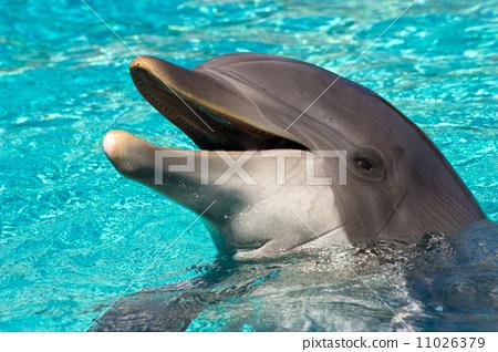 海洋哺乳动物 stock photos
