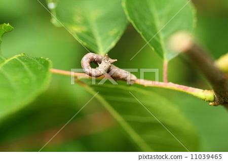 关于幼虫手工制作