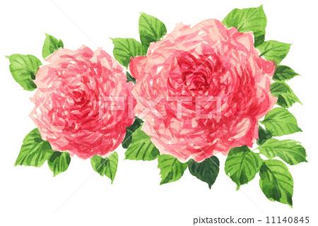 图库插图: 玫瑰 玫瑰花 水彩画