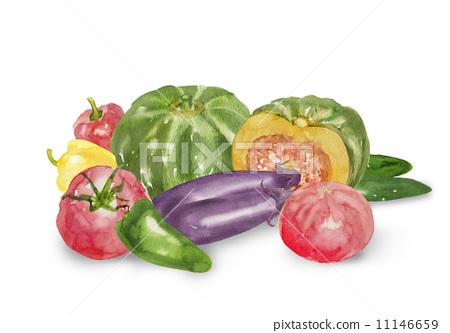 蔬菜 水彩画 夏季蔬菜