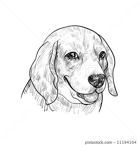 可爱的小狗 狗