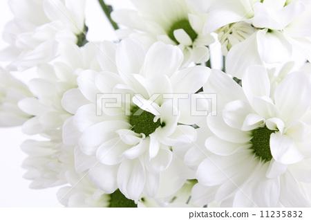 描写花卉的词语有哪些-描写花卉的