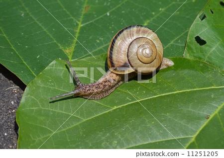 照片: 蜗牛 耳蜗 单壳软体动物壳