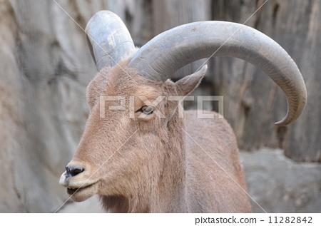 食草动物 陆生动物
