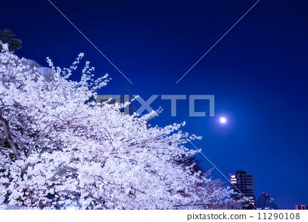 夜晚的樱花树 月亮 樱桃树