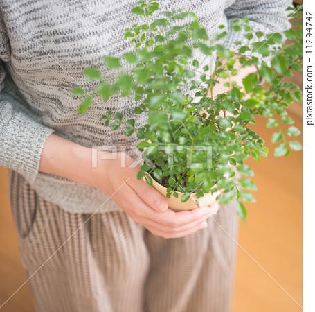 观叶植物 室内盆栽 梣树