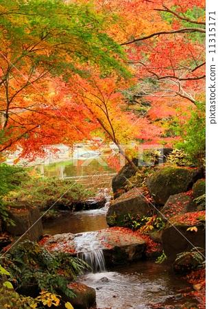 壁纸 枫叶 风景 红枫 树 318_450 竖版 竖屏 手机
