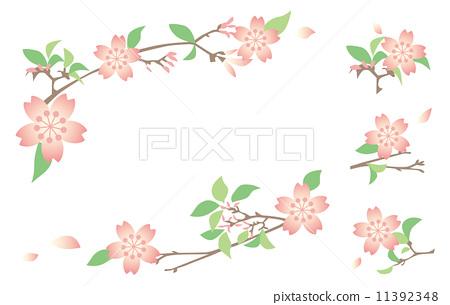 花朵 开花 树枝