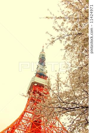 樱桃树 樱花 东京铁塔